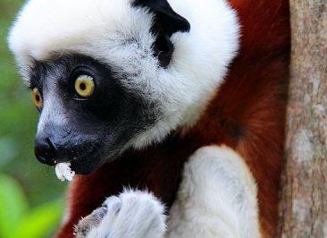 Parc d'Andasibe – Madagascar 2
