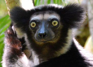 Parc d'Andasibe – Madagascar 3