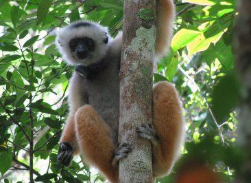Parc d'Andasibe – Madagascar